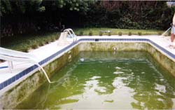 green pool picture